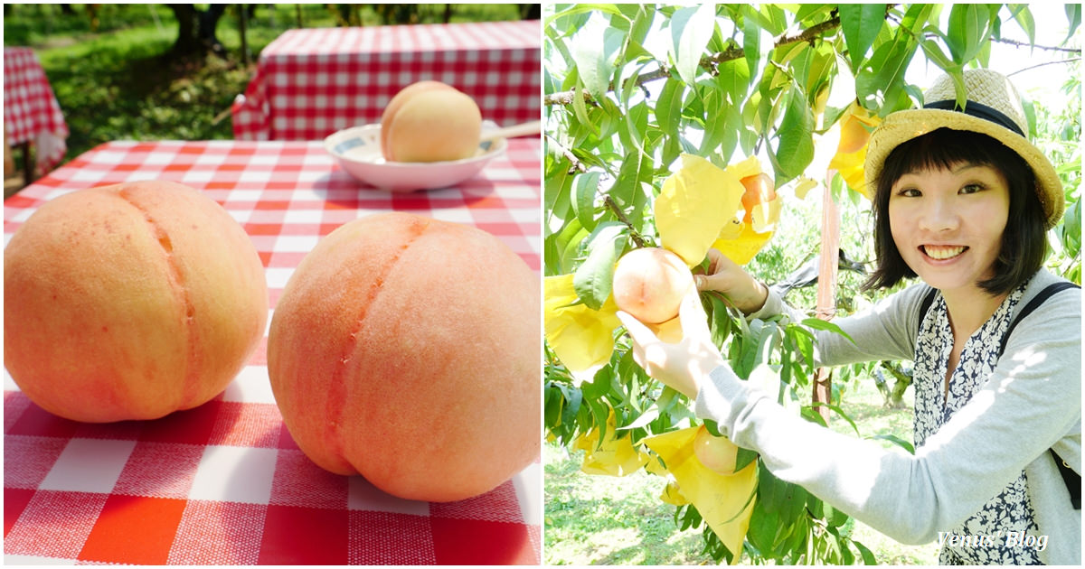 岡山西山農園採水蜜桃,教你完美切水蜜桃小秘密