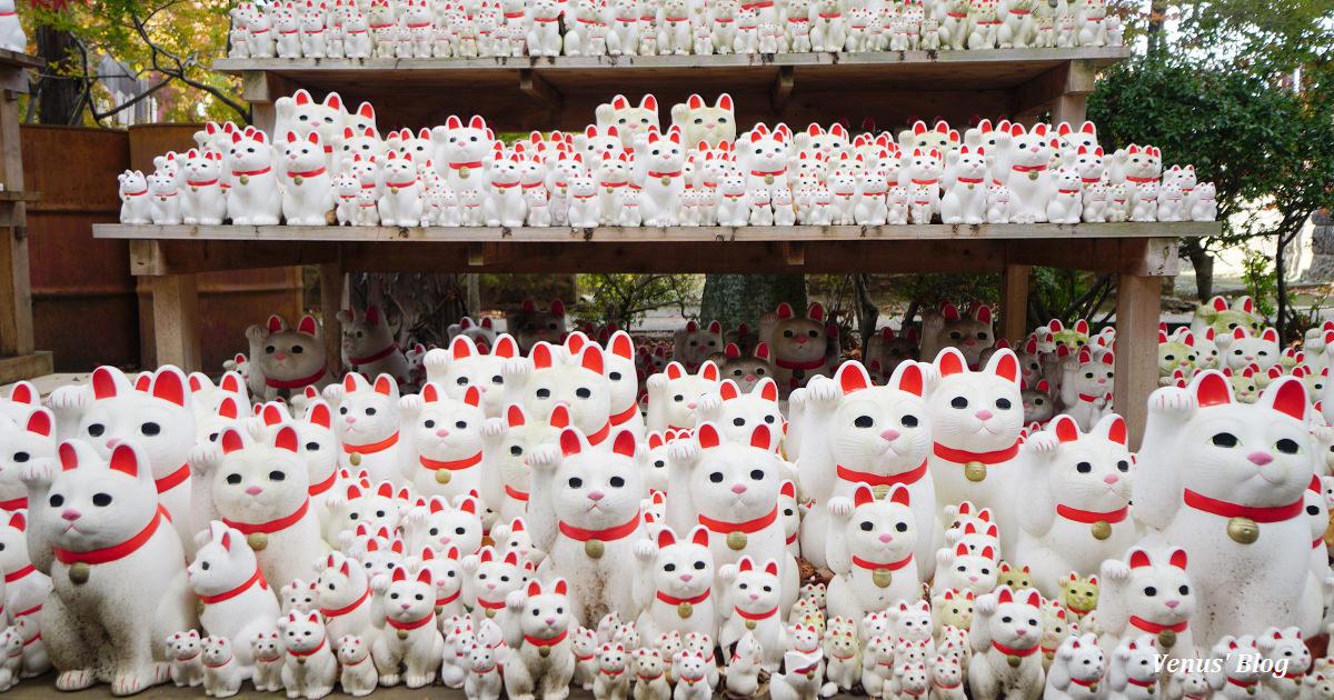 東京豪德寺|招財貓的發源地,意外遇上美麗紅葉