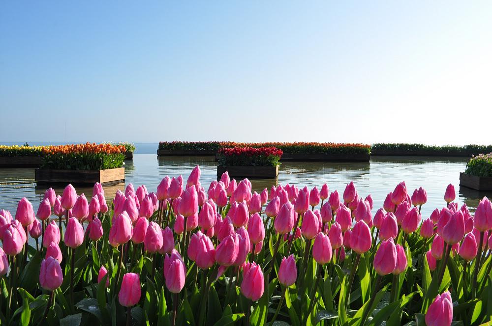 茨城 國營海濱公園冬季水上鬱金香、記念之森咖啡館