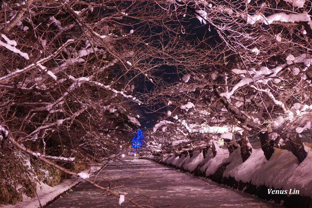 青森 弘前城冬天賞雪夜櫻,震撼全日本SNS,雪夜櫻滿開時刻小秘密