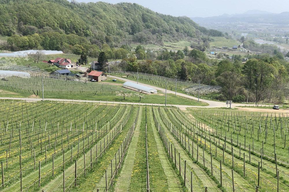 北海道仁木 NIKI Hills Winery葡萄酒莊、生產供應米其林餐廳的頂級葡萄酒