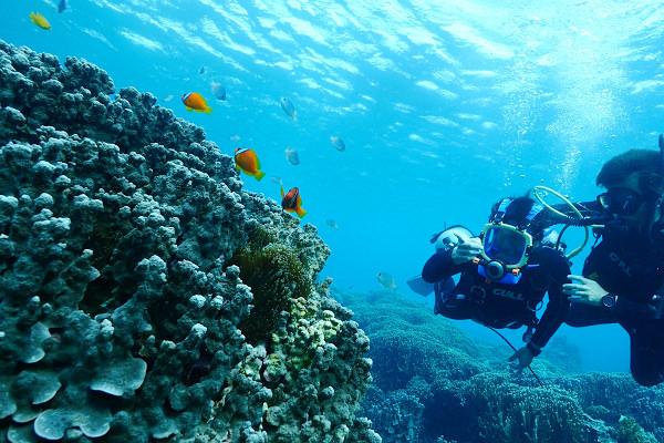 【宮古島必玩】卡雅法海岸玩浮潛、深潛(激推無重力慢潛,只要會呼吸就可以輕鬆潛水)、獨木舟 – 海底世界超美、驚喜一次看到四種小丑魚