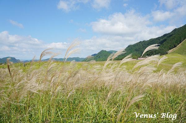 【日本奈良一日遊】曾爾高原賞芒草、宇陀松山古時村落