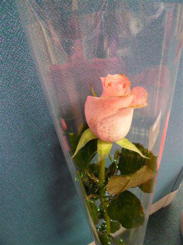 【台北新店】老闆送女生的玫瑰花