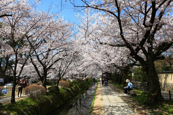 【2012日本賞櫻】京都賞櫻即時連線DAY5 DAY 6 DAY 7 (行程+旅行日記)